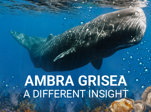 Ambra Grisea- A Different Insight